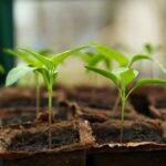 Handige tips voor een duurzame tuin